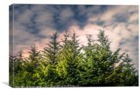Cloudy Day in the Pine Forest , Canvas Print