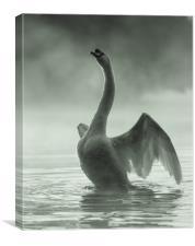Stretching Swan, Canvas Print