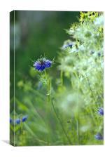 Blue cornflower., Canvas Print