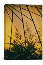Bamboo Shadows, Canvas Print