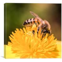 Honey Bee, Canvas Print