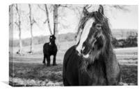 Curious horses, Canvas Print