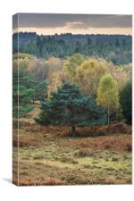Autumn New Forest National Park, Hampshire, Englan, Canvas Print