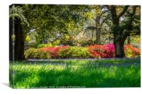 Bluebell fields and colourful rhododendrons, Canvas Print