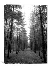 Looking for Aliens in Rendlesham Forest, Canvas Print