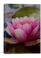 A beautiful waterlily, Canvas Print