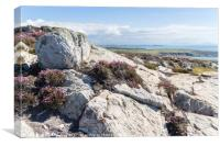 View over rocks and purple heather, Canvas Print