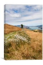 Grass and wild flowers on a hill overlooking the n, Canvas Print