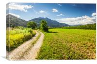 Rural road in Trento among Alps, Canvas Print