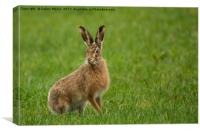 The brown hare, Canvas Print