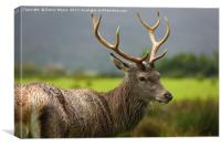 The Stag , Canvas Print