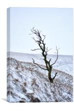 Solo Tree Winter Colour, Canvas Print