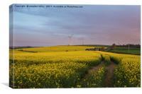 Dawn over rape seed field, Canvas Print