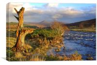 River Brora in Autumn, Canvas Print