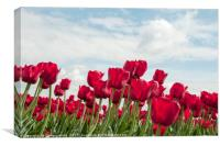 red tulips and blue sky  , Canvas Print