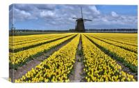 dutch windmill and tulip fields, Canvas Print