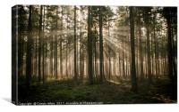 sunbeam in forest in holland, Canvas Print
