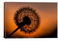 Dandelion Sunset, Canvas Print
