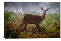 Portrait of a Red Deer Hind, Canvas Print