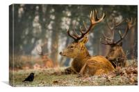 The Stag and the Jackdaw, Canvas Print