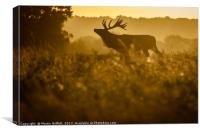 Sunrise Stag Silhouette, Canvas Print