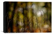 Autumn Grass, Canvas Print