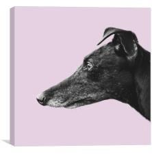 Greyhound Profile, Canvas Print