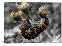 Yellow and black caterpillar, Canvas Print