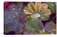Colour manipulated raindrops on leaves