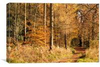 Autumn colours, riverside walk, November 2103