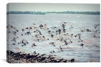 Photo art, Oystercatchers in flight, Canvas Print