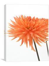 Orange, Canvas Print