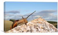 Snail break, Canvas Print