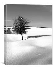 Little Tree in the virgin snow, Canvas Print