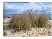 Beach Grass, Canvas Print