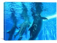 Dolphins underwater, Canvas Print
