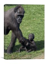 Baby Gorilla and Mum, Canvas Print