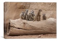 Meerkats, Canvas Print