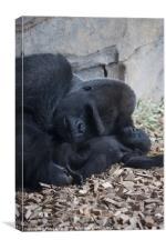 Gorilla with baby 2, Canvas Print