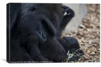 Gorilla with baby 3, Canvas Print