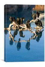 Cormorant reflections, Canvas Print