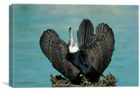 Cormorant Display, Canvas Print