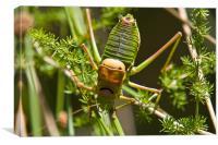 Grasshopper, Canvas Print