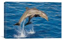 Jumping Dolphins, Canvas Print