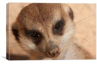 Meercat Smile, Canvas Print