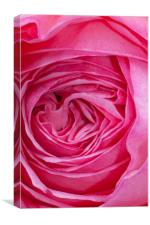 Velvet Rose, Canvas Print