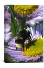Bee at work, Canvas Print