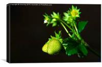 Strawberry Plant, Canvas Print