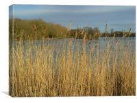 Lakeside Grass, Canvas Print