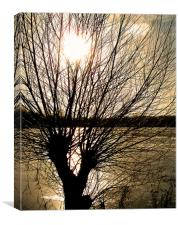 Tree Silhouette, Canvas Print
